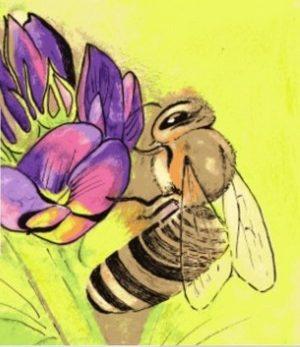 Les ruchers côtiers
